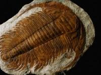 გეოლოგია, პალეონტოლოგია და ევოლუცია